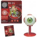 Model - Ein-o Science Human Biology Eye