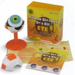 Model Eyeball 2.5in.