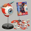 Puzzle - 4D Eyeball Anatomy Model