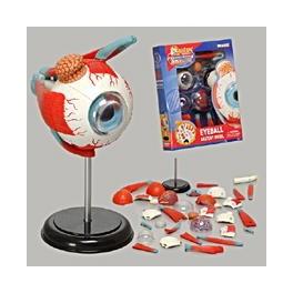 Puzzle - 4D Eyeball Anatomy Model